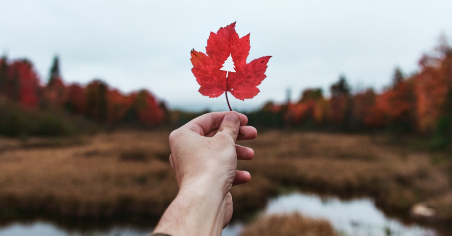 hand holding red leaf with tree cut out of it