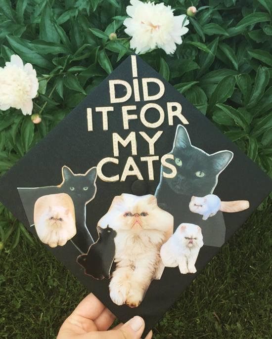 i did it for my cats easy graduation cap design